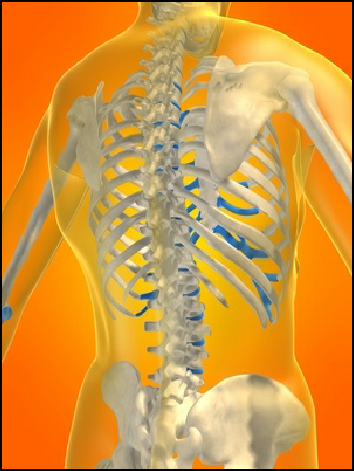 Back Pain TX 14 CR